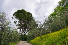 Jaillissez en Toscane, une promenade en parc près de San Gimignano Photographie stock
