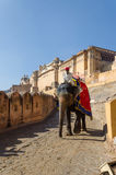 Jaipur, Índia - 29 de dezembro de 2014: Elefante decorado em Amber Fort em Jaipur Foto de Stock Royalty Free