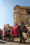 Jaipur, Índia - 29 de dezembro de 2014: Os turistas apreciam o passeio do elefante em Amber Fort Fotos de Stock Royalty Free