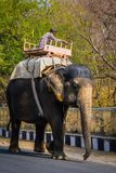 JAIPUR, ÍNDIA - 12 DE JANEIRO DE 2018: O elefante está andando ao longo da estrada Um veículo indiano tradicional Imagens de Stock
