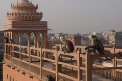 Jaipur, die rosafarbene Stadt Stockfotos
