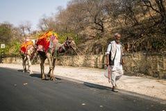 JAIPUR, INDE - 12 JANVIER 2018 : Un homme est des avances des chameaux sur la route image stock