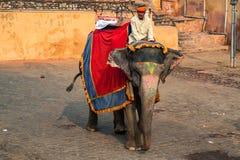 JAIPUR, INDIA - CIRCA NOVEMBRE 2017: L'uomo non identificato guida l'elefante Immagini Stock