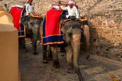 JAIPUR, INDIA - CIRCA NOVEMBRE 2017: L'uomo non identificato guida l'elefante Fotografia Stock