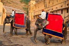 JAIPUR, INDIA - CIRCA NOVEMBRE 2017: L'uomo non identificato guida l'elefante Fotografia Stock Libera da Diritti