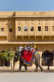 Jaipur, India - December 29, 2014: Decorated elephant carries to Amber Fort in Jaipur. Royalty Free Stock Images