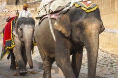 JAIPUR, INDIA - 28 GENNAIO 2017: Il giro non identificato degli uomini decora Immagine Stock Libera da Diritti