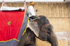 JAIPUR, INDIA - 28 GENNAIO 2017: Il giro non identificato degli uomini decora Immagine Stock