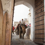 JAIPUR, INDIA - 28 GENNAIO 2017: Il giro non identificato degli uomini decora Fotografia Stock Libera da Diritti