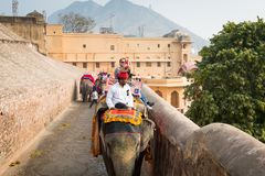 Amber Palace, Jaipur, Rajasthan state, India. JAIPUR, INDIA - JAN 19, 2016: Unidentified Indian man rides an elephant. Indian elephants used to be one of the royalty free stock image
