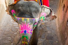 Amber Palace, Jaipur, Rajasthan state, India. JAIPUR, INDIA - JAN 19, 2016: Unidentified Indian man rides an elephant. Indian elephants used to be one of the royalty free stock images