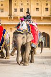 Amber Palace, Jaipur, Rajasthan state, India. JAIPUR, INDIA - JAN 19, 2016: Unidentified Indian man rides an elephant. Indian elephants used to be one of the royalty free stock photos