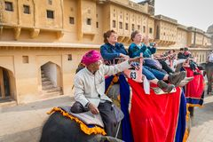 Amber Palace, Jaipur, Rajasthan state, India. JAIPUR, INDIA - JAN 19, 2016: Unidentified Indian man rides an elephant with tourists. Indian elephants used to be royalty free stock images