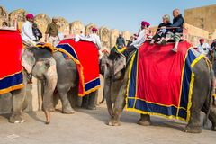 Amber Palace, Jaipur, Rajasthan state, India. JAIPUR, INDIA - JAN 19, 2016: Unidentified Indian man rides an elephant with tourists. Indian elephants used to be royalty free stock photos