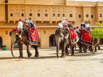 Western Tourists riding the elephants at Amber Fort in Jaipur, India. Jaipur, India - March 10, 2018: Western tourists riding the decorated elephants at Amber Stock Photography