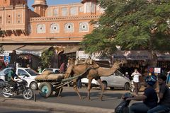 Jaipur, India - November 2011 Royalty Free Stock Photo