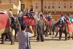 Jaipur, India, 10 november, 2011: De Indische rit van olifantsruiters met toeristen aan Amber Fort Stock Afbeeldingen
