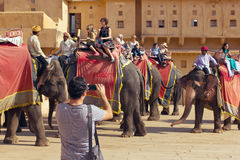 Jaipur, India, november 10, 2011: Indian elephant riders ride with tourists to Amber Fort Stock Images