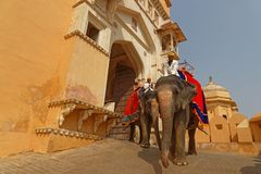 Elephants through the doors of Amber palace Stock Photography
