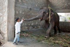 JAIPUR INDIA-SEPT 26: Pojken och behandla som ett barnelefanten i vilen Royaltyfria Foton