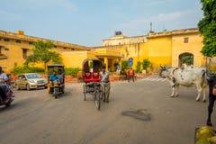JAIPUR, INDIA - 19 SETTEMBRE 2017: La mucca cammina indifferente, in mezzo del traffico delle automobili e delle motociclette del Fotografia Stock Libera da Diritti