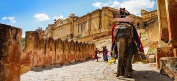 JAIPUR, INDIA, Wrzesień 26, 2013: Jeździeccy słonie do Am Obraz Stock