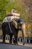 JAIPUR INDIEN - JANUARI 12, 2018: Elefanten promenerar vägen Ett traditionellt indiskt medel Arkivbilder