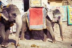 JAIPUR INDIEN - SEPTEMBER 18, 2017: Oidentifierade manrittanständigheter Fotografering för Bildbyråer