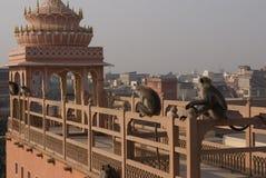 Jaipur, la città dentellare Fotografie Stock