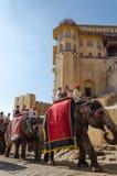 Jaipur, la India - 29 de diciembre de 2014: Los turistas disfrutan de paseo del elefante en Amber Fort Fotos de archivo libres de regalías