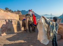 JAIPUR, RAJASTAN, INDIA - Januari, 27: Verfraaide olifant in Amb royalty-vrije stock afbeeldingen