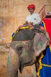 JAIPUR RAJASTAN, INDIEN - Januari, 27: Dekorerad elefant på Amb Arkivbild