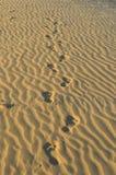 Jaisalmer fotografia stock