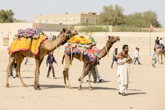 Camel and indian men in Desert Festival. Jaisalmer, Rajasthan, India. JAISALMER, INDIA - FEBRUARY 08, 2017 : Camel and indian men in Desert Festival. Jaisalmer Royalty Free Stock Photography