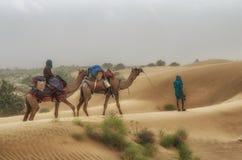 Cameleer in desert Stock Image