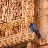 India. Pigeon tired to shit, and it rests on facade of Royal Pal Royalty Free Stock Image