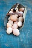 jaja świeże uprawiają Zdjęcie Stock