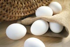 jaja białych kurcząt Obrazy Stock