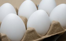 jaja kurczaków 6 obraz stock