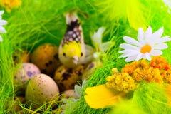 jaja ptaków kwiaty gniazdo Obrazy Royalty Free
