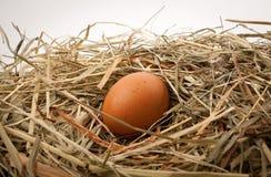 jajeczna gniazdowa słoma Fotografia Stock