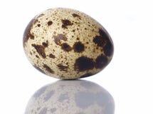 jajeczna przepiórka Fotografia Royalty Free