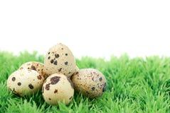 jajeczna przepiórka Zdjęcie Stock