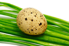 jajeczna przepiórka Zdjęcia Stock