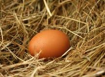 jajeczna słoma Zdjęcia Stock