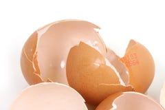 jajecznej skorupy biel Obrazy Royalty Free