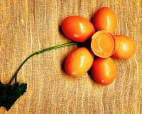 Jajeczni kwiaty Fotografia Stock
