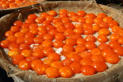 jajeczni yolks Fotografia Royalty Free