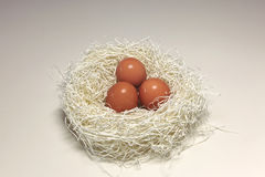 jajeczny gniazdeczko zdjęcia royalty free