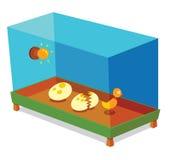 Jajeczny inkubator Zdjęcie Royalty Free